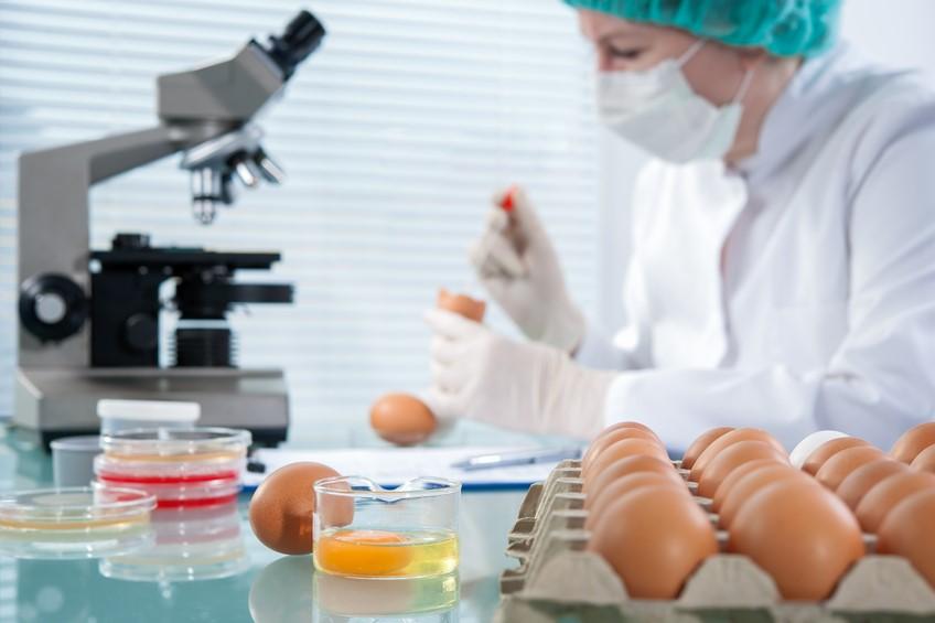 Gıda Mühendisi | Meslekler